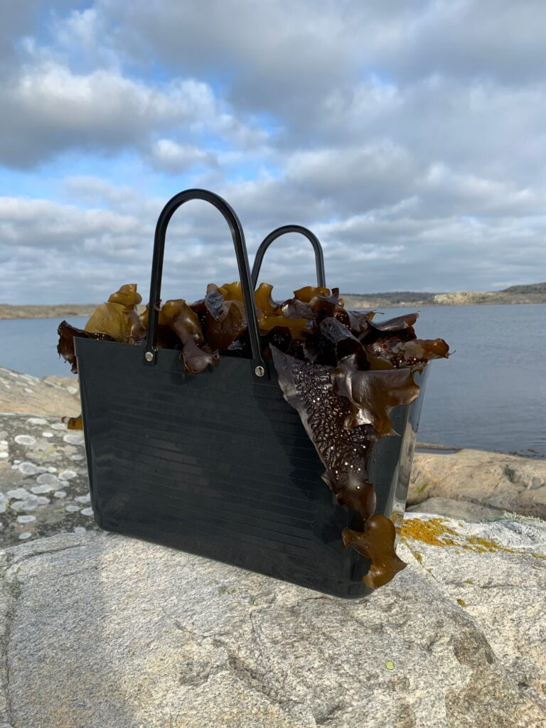 tångodling, bohuslän, ten island seafarm, Knippla, båtcharter
